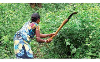 Rural India's Women Workforce: