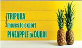 TRIPURA moves to export PINEAPPLE to DUBAI